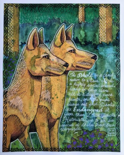 D is for Dhole watercolor painting