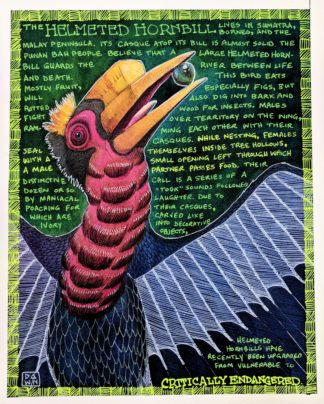 H Is for Helmeted Hornbill final artwork