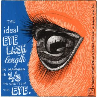The ideal eyelash length is one third the width of the eye