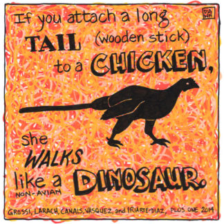 If you attach a long tail to a chicken, it walks like a dinosaur