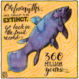 Coelacanths once thought extinct go back in the fossil record 360 million years