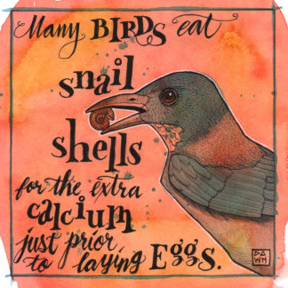 Many birds eat snail shells for the extra calcium just prior to laying eggs