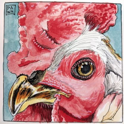 Rooster Portrait watercolor and ink drawing