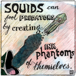 Squids can fool predators by creating ink phantoms of themselves