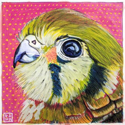 """Kalli"""" American Kestrel ink painting"""