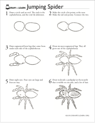How to Draw a Jumping Spider Worksheet front