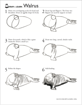 How to Draw a Walrus Worksheet front