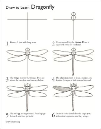 How to Draw a Dragonfly Worksheet front