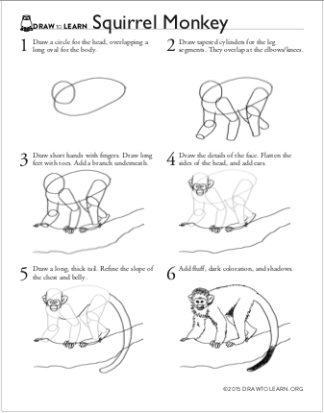 How to Draw a Squirrel Monkey Worksheet front